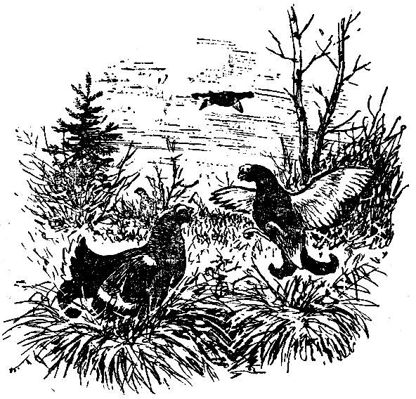 Другие способы охоты на вальдшнепа 1957 Герман В