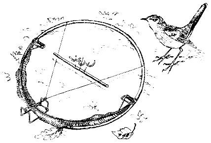 Как поймать птицу своими руками